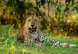 Sri Lanka Wildlife Highlights & Beach