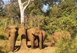 Angkor Temples, Mekong & Elephants